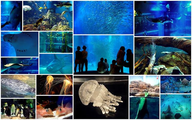 aquarium+kollaasi.jpg