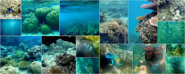 Pictures from both snorkeling days - about 6 times in the water :)