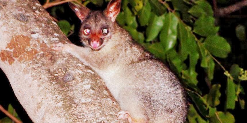 A local resident of Darwin, NT, Australia