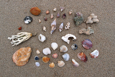 A small sample of all the different shells you can find on the beach