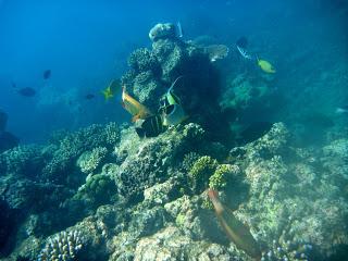 Great Barrier Reef - Australia