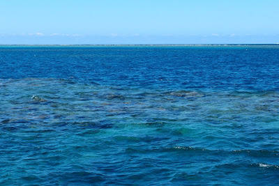 You could see the corals even from above the surface (and the waves crashing to the end of the reef in the distance)