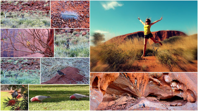 "lots of other wildlife in the Red Centre .. plus one ""wild thing"""