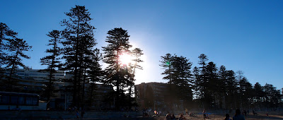 Beaches lined with pine trees