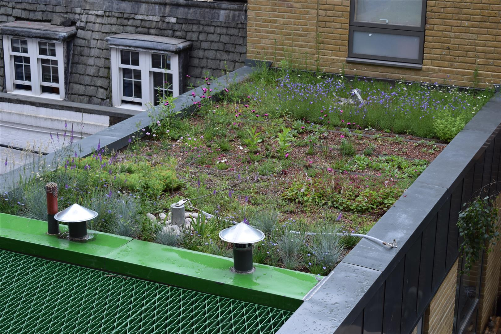 54 Portland Place - Green Roof.