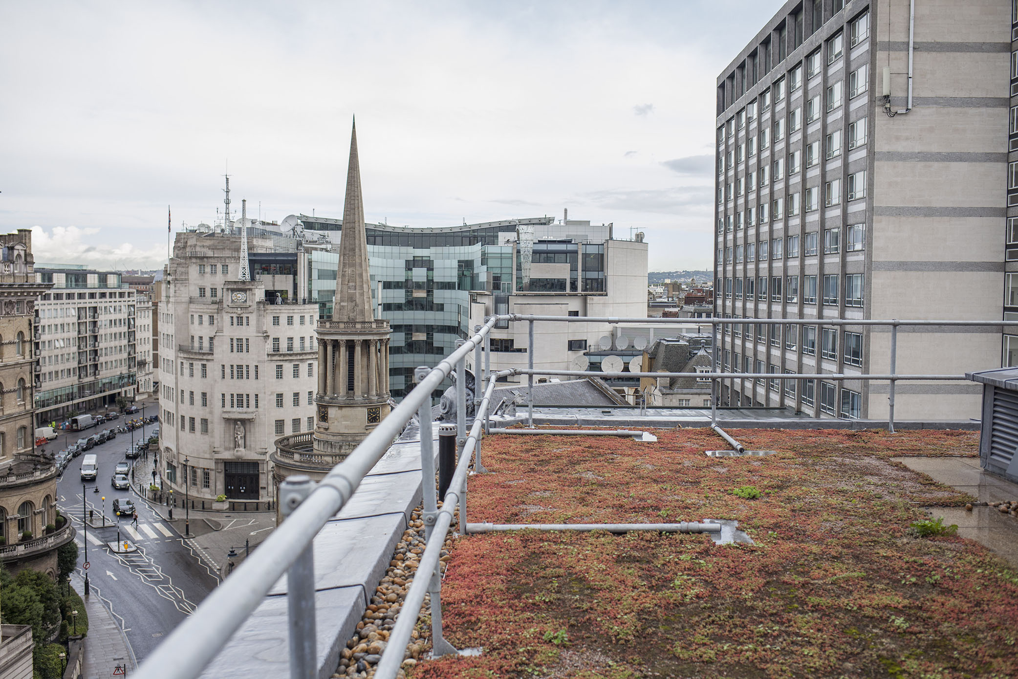 Albany House - Green Roof.