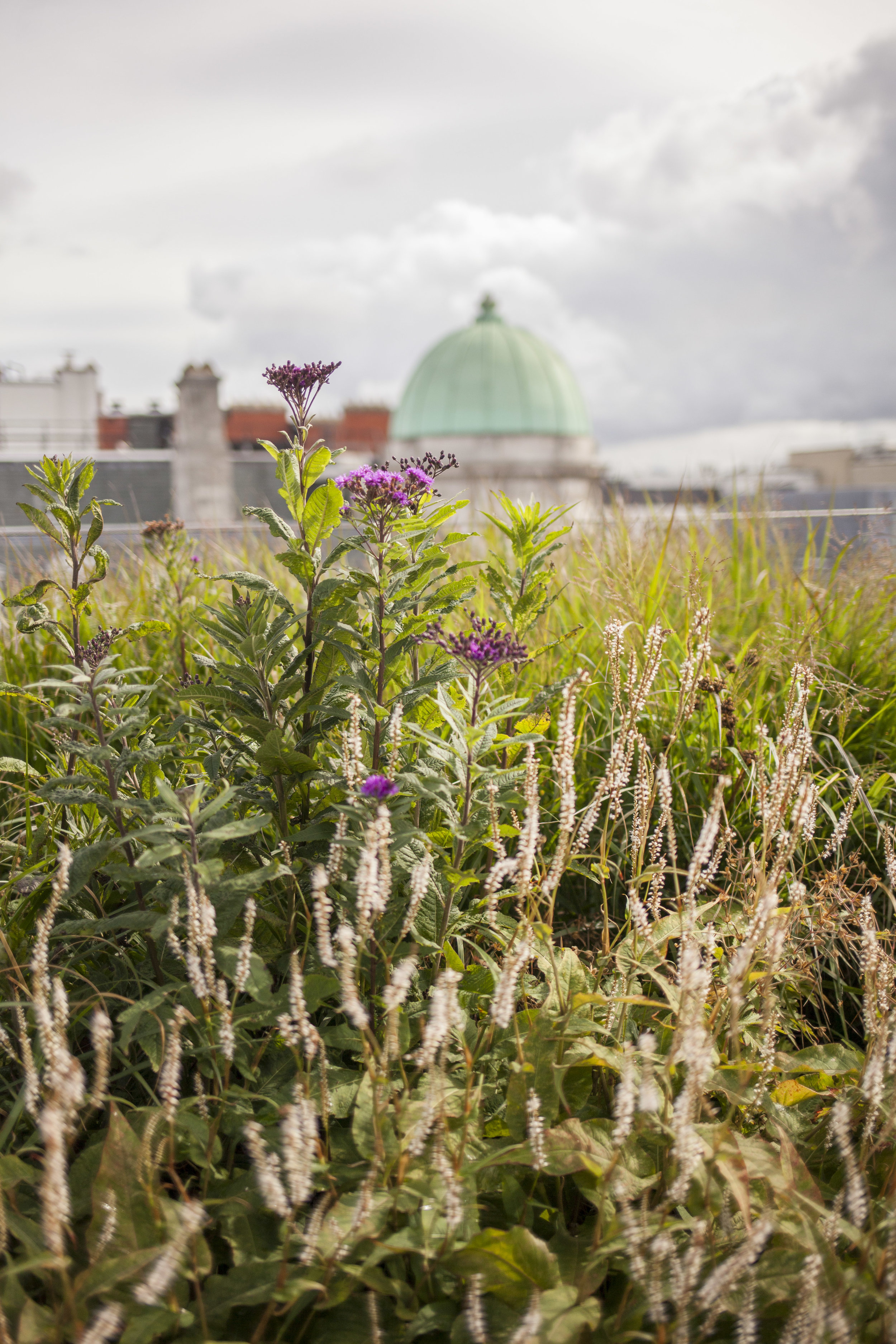 Crown Estate - Rooftop Garden