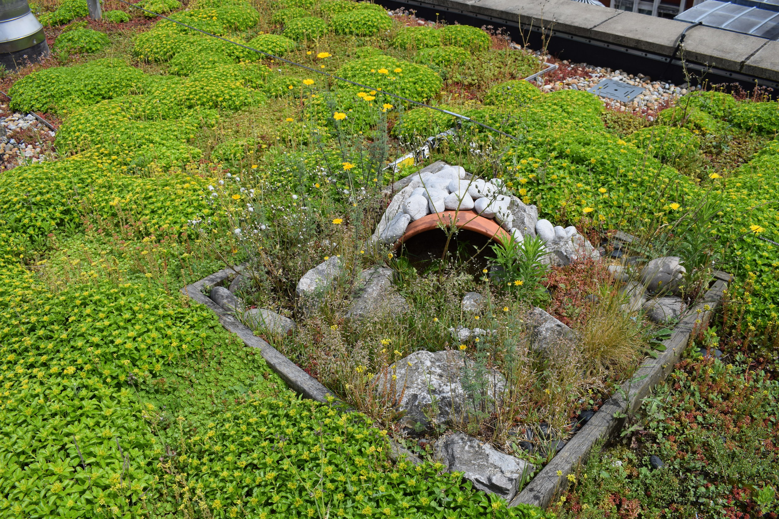11 Slingsby Place - Green Roof