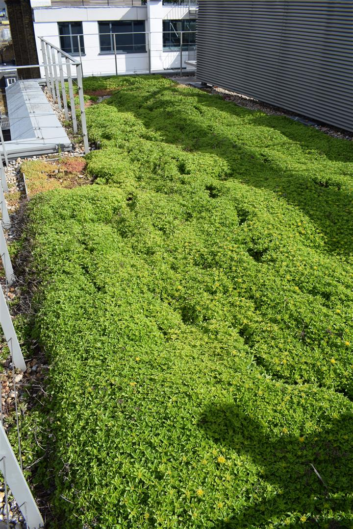 Shaftesbury Green Roof