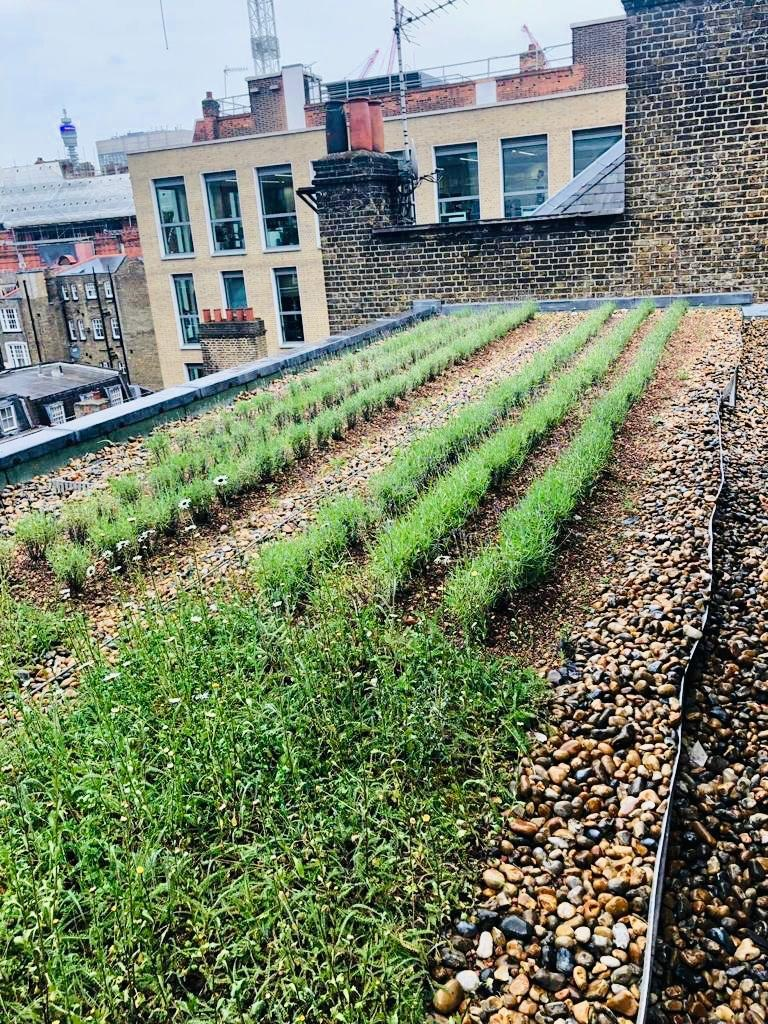 35-36 Grosvenor Street Green Roof.