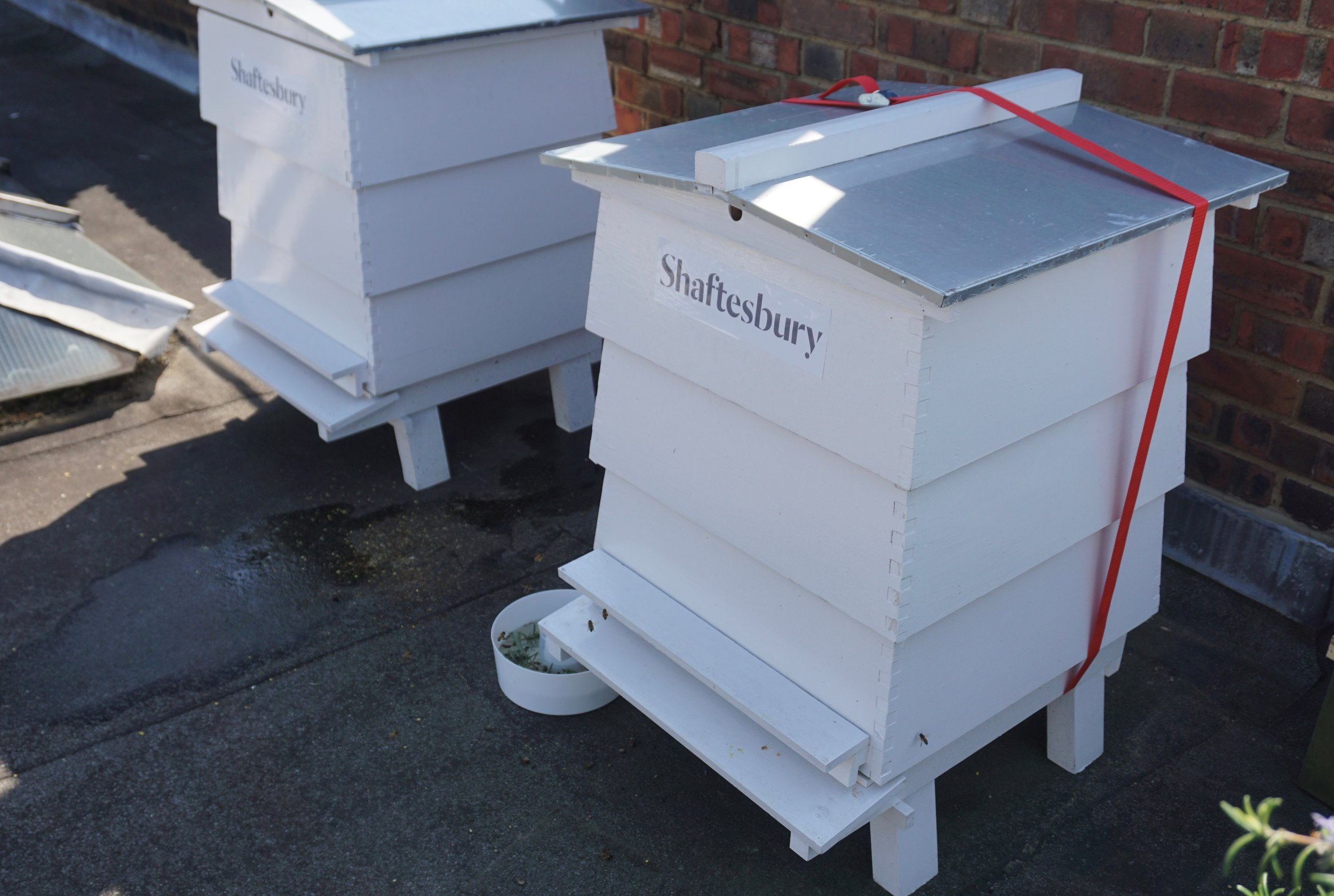 New Beehives in Shaftesbury.