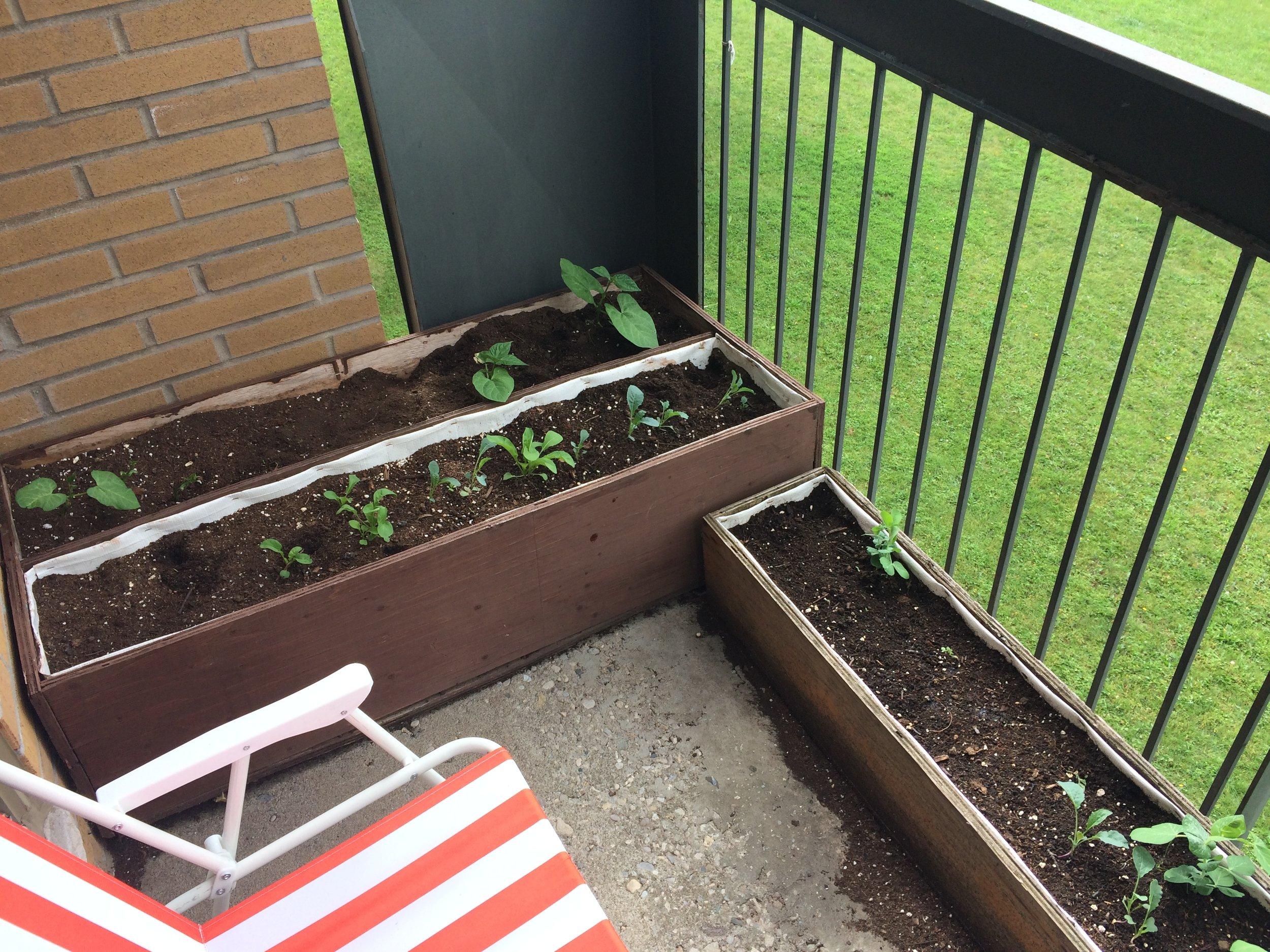 Kitchener Team's balcony garden