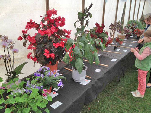 Horticultural-show-7.jpg