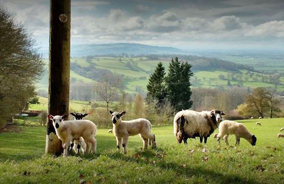 views-shepherds-huts-near-broadway-tower-worcestershire-cotswolds-c.jpg