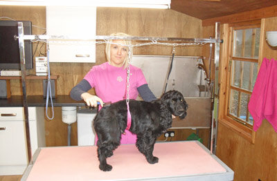 Broadway Dog Groomers - Lucie 07807666859 The Old Stables, Collin Lane, Broadway, WR12 7PB. From Labradors to Lhaso Apsos - please ring to make an appointment.