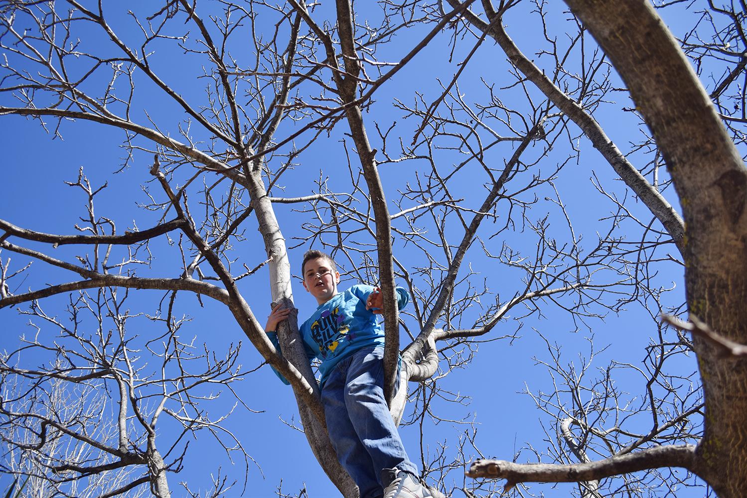 arriba del árbol.jpg