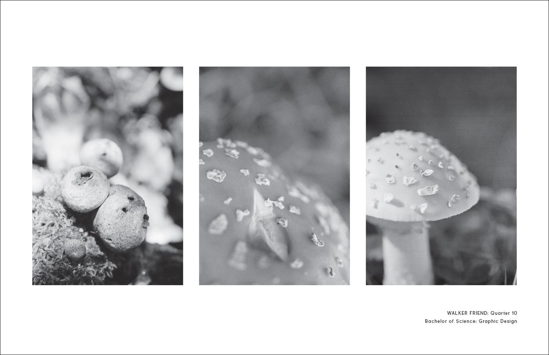 Photographs by Walker Friend