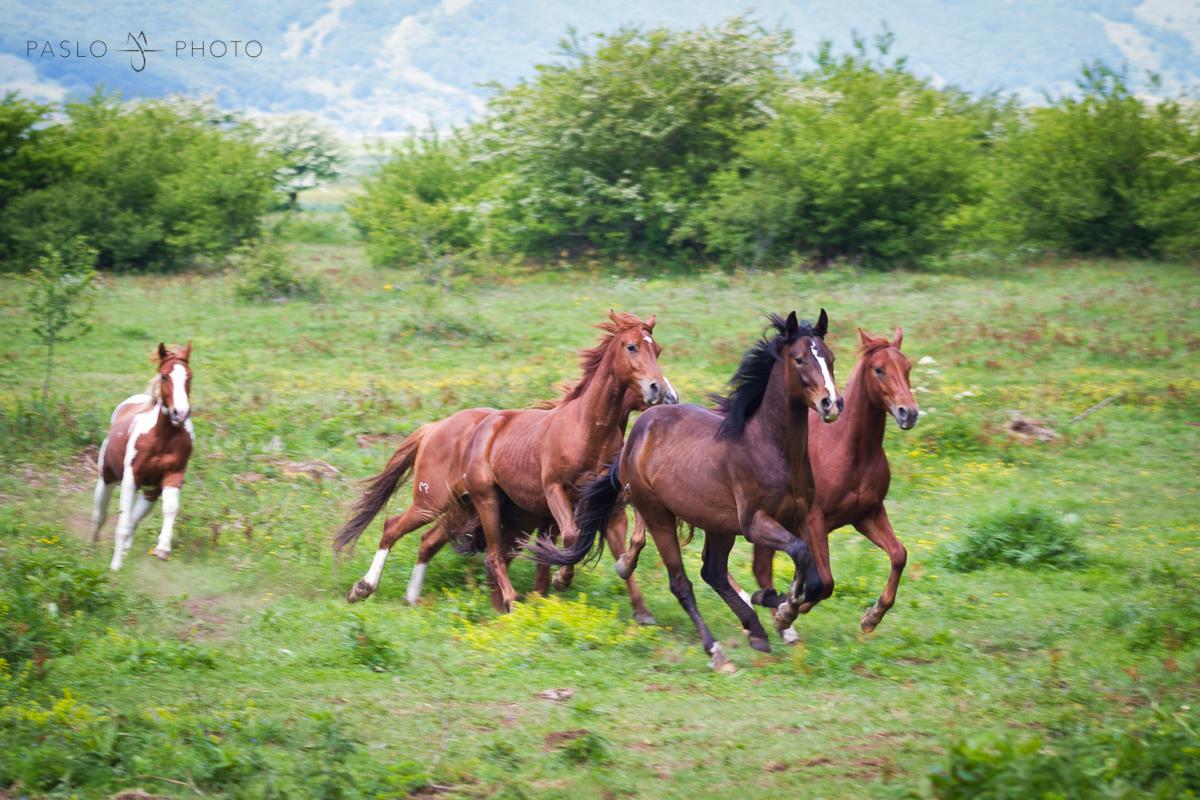 Free foals