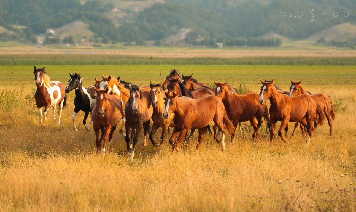 puledri matese ranch