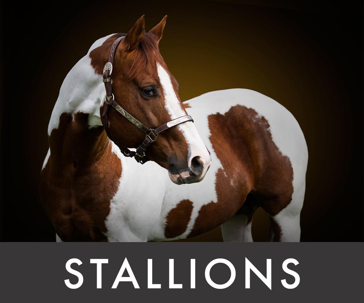 MateseRanch_Stallions_Listogun.jpg