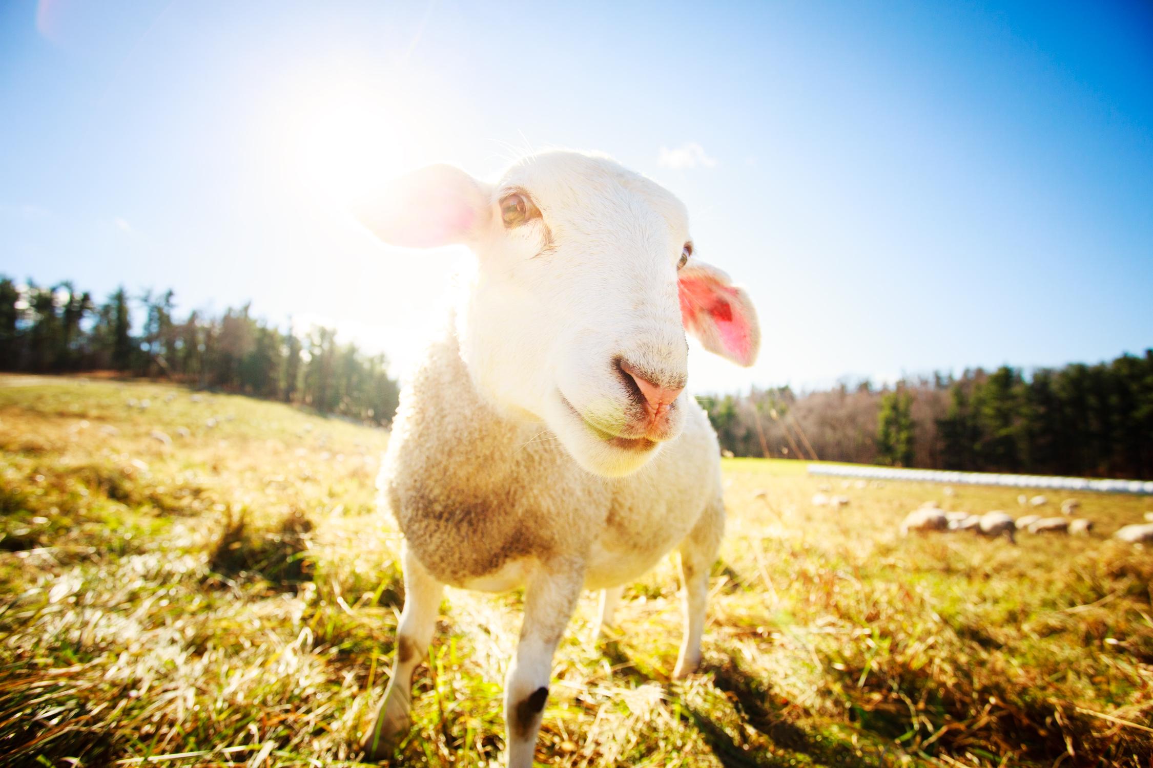 131118_Farm_Animals_0011_edit-copy.jpg