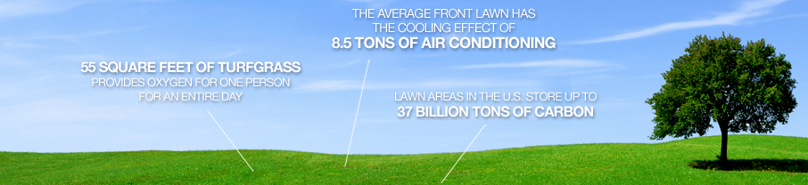 Image provided by The Lawn Institute- Click the picture to be taken to their website for more great information!