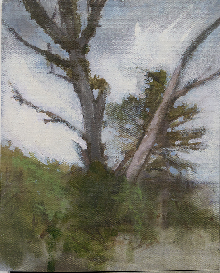 Martin's Trees
