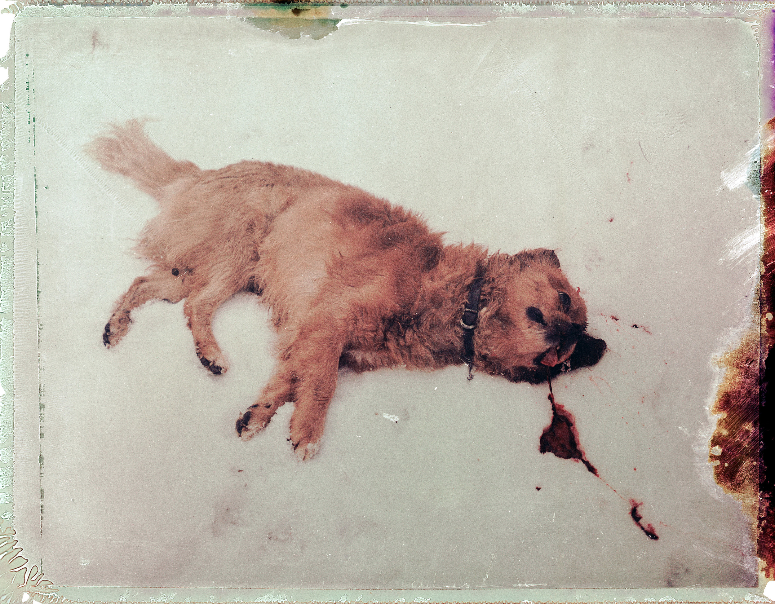 Accident. Hidegség, Romania, 2009