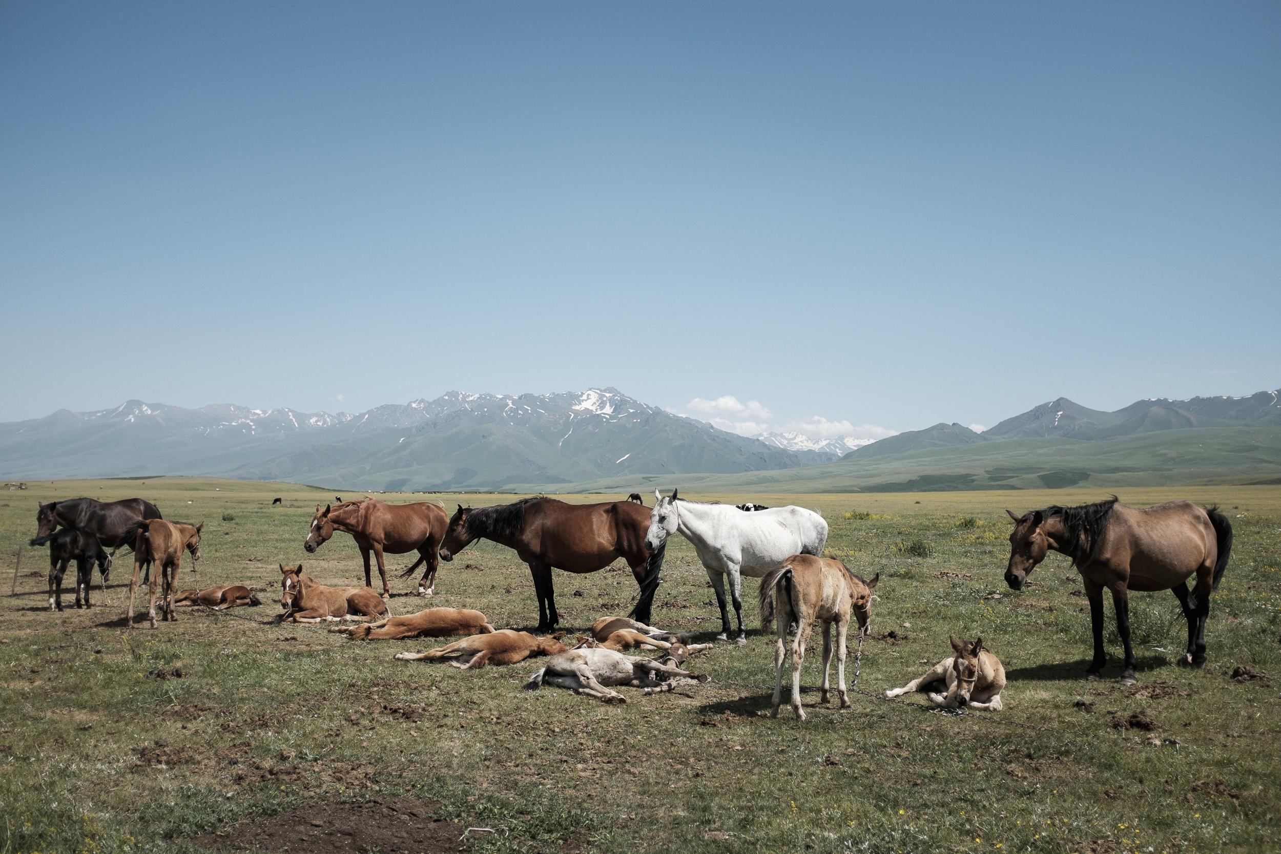 """""""Horsegarten"""" in Suusamyr valley, Kyrgyzstan"""