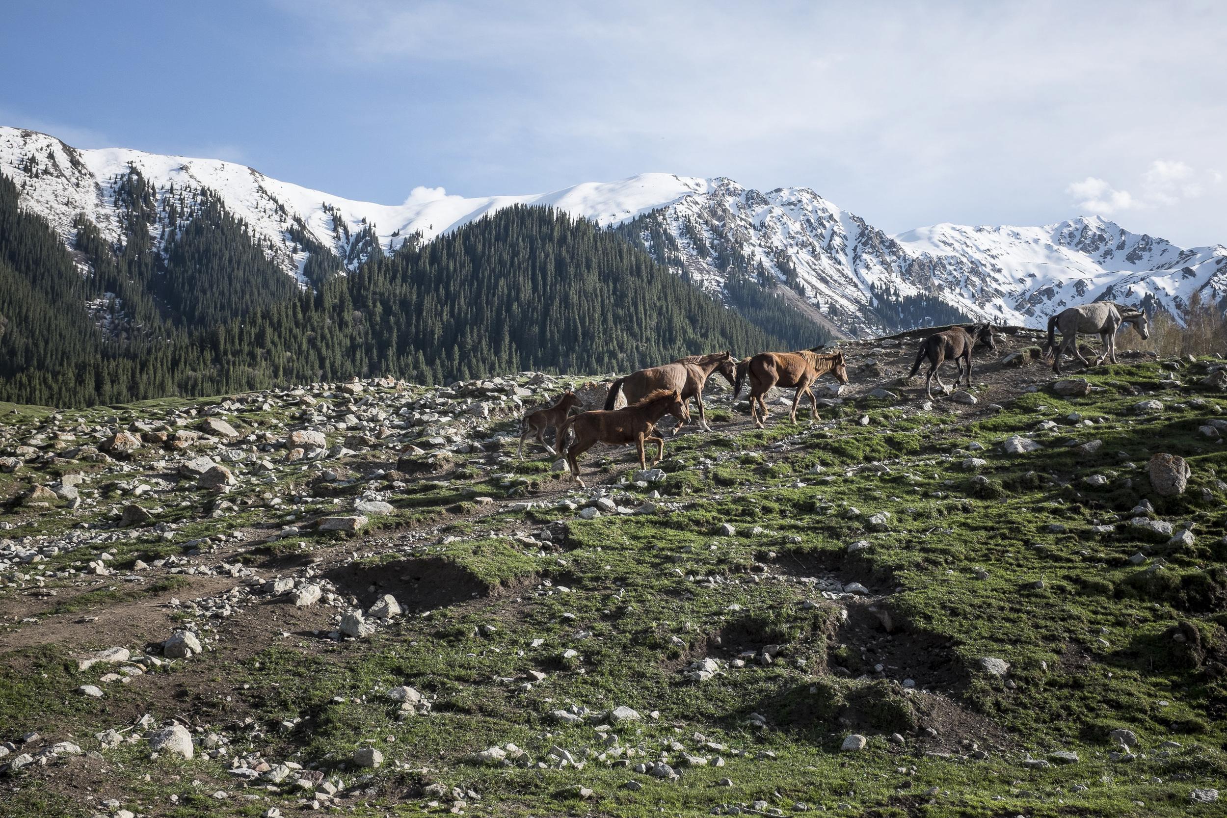 Hiking in the Tien-San mountains, near Yeti Ogüz (Seven Bulls) rocks. Issyk-Kul region, Kyrgyzstan.