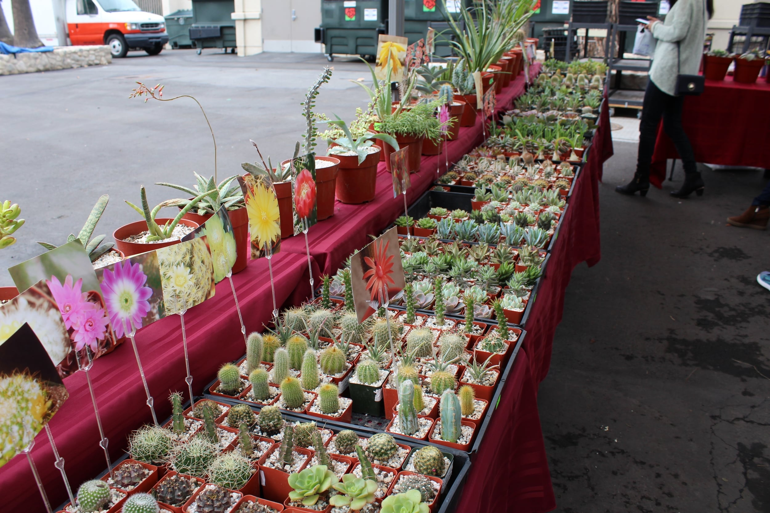 Succulents + Cacti | Rose Bowl Flea Market | Los Angeles | Interior Design | www.foundandkept.com