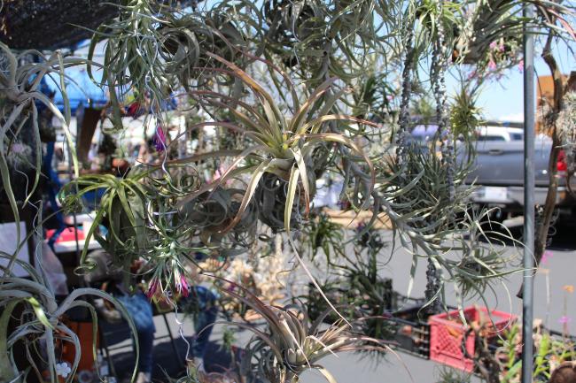 Long Beach Flea Finds | Emily Dillon | www.foundandkept.com