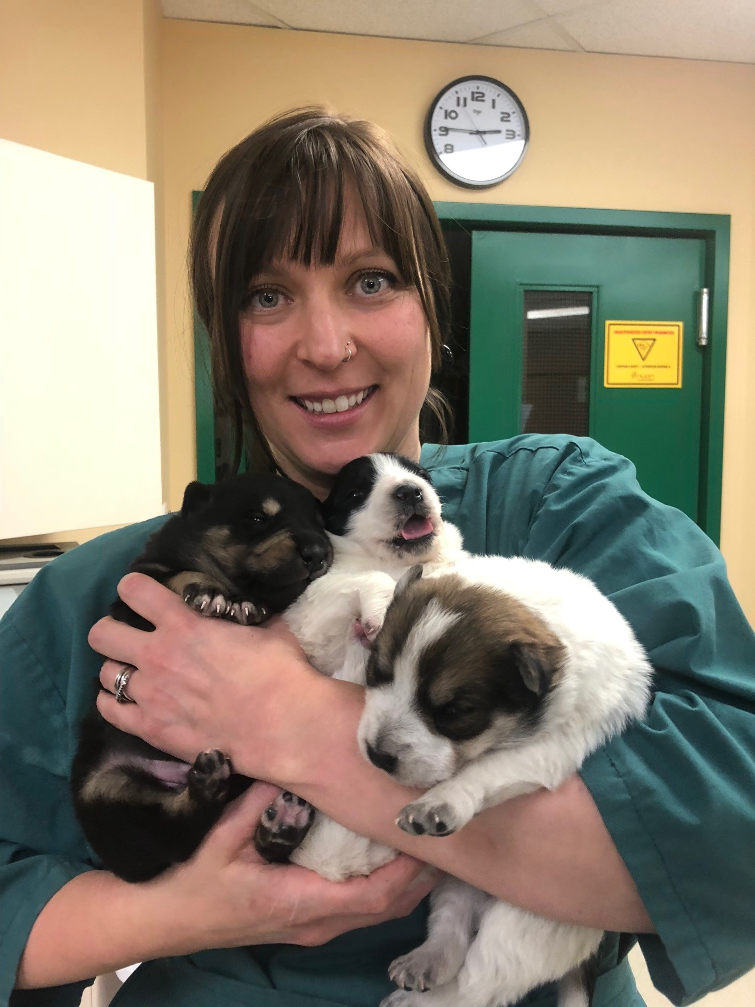 An armload of puppies!  These cuties were in for their check-ups from the SPCA.