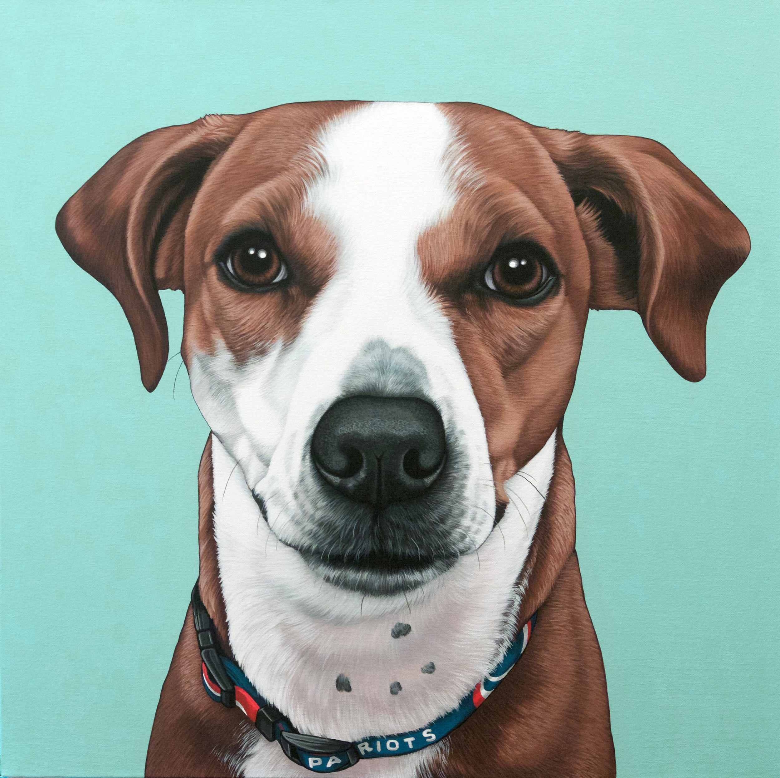 """Brady"", latex enamel on canvas, 24"" x 24"", 2016"