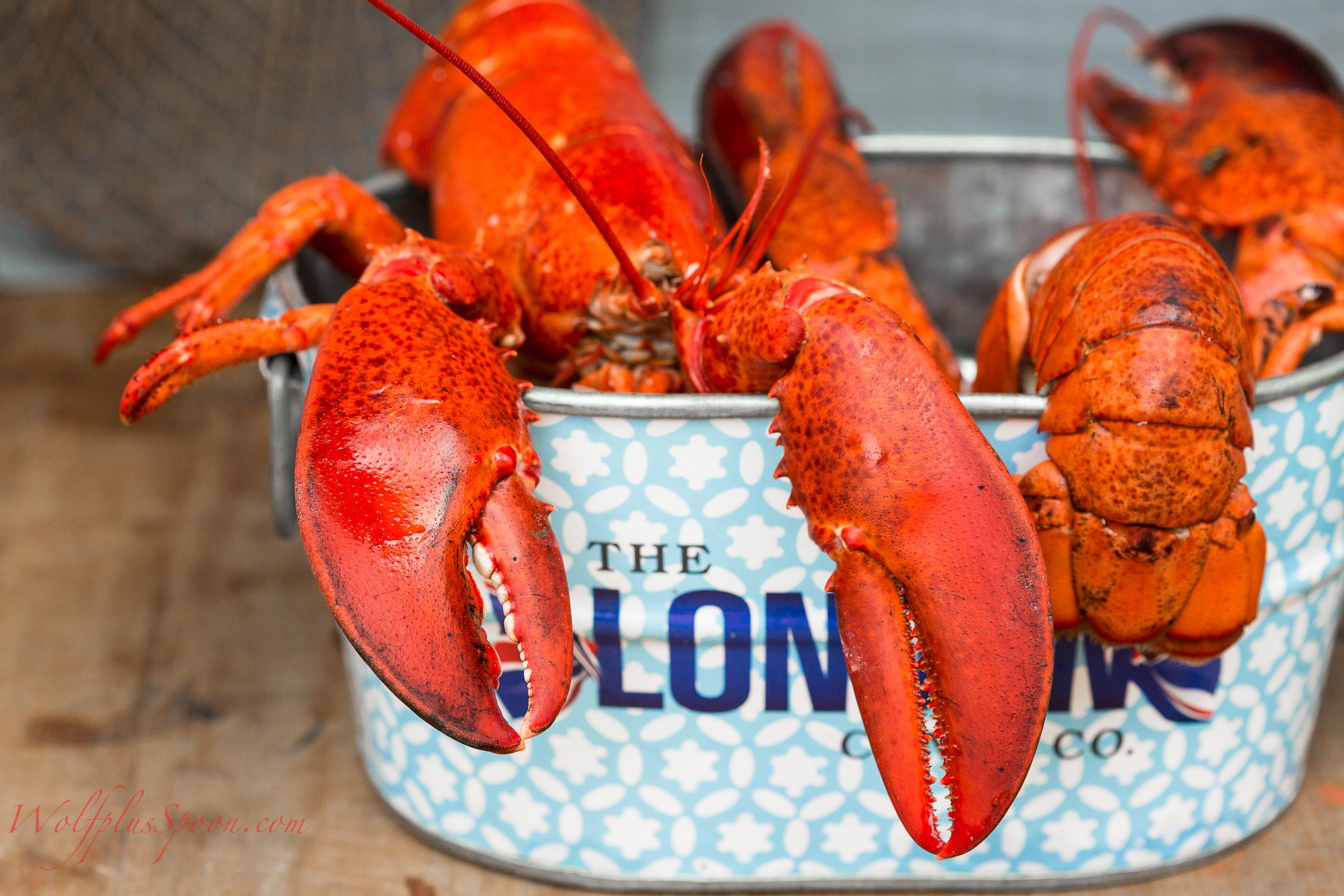 lobster salad_-012.jpg