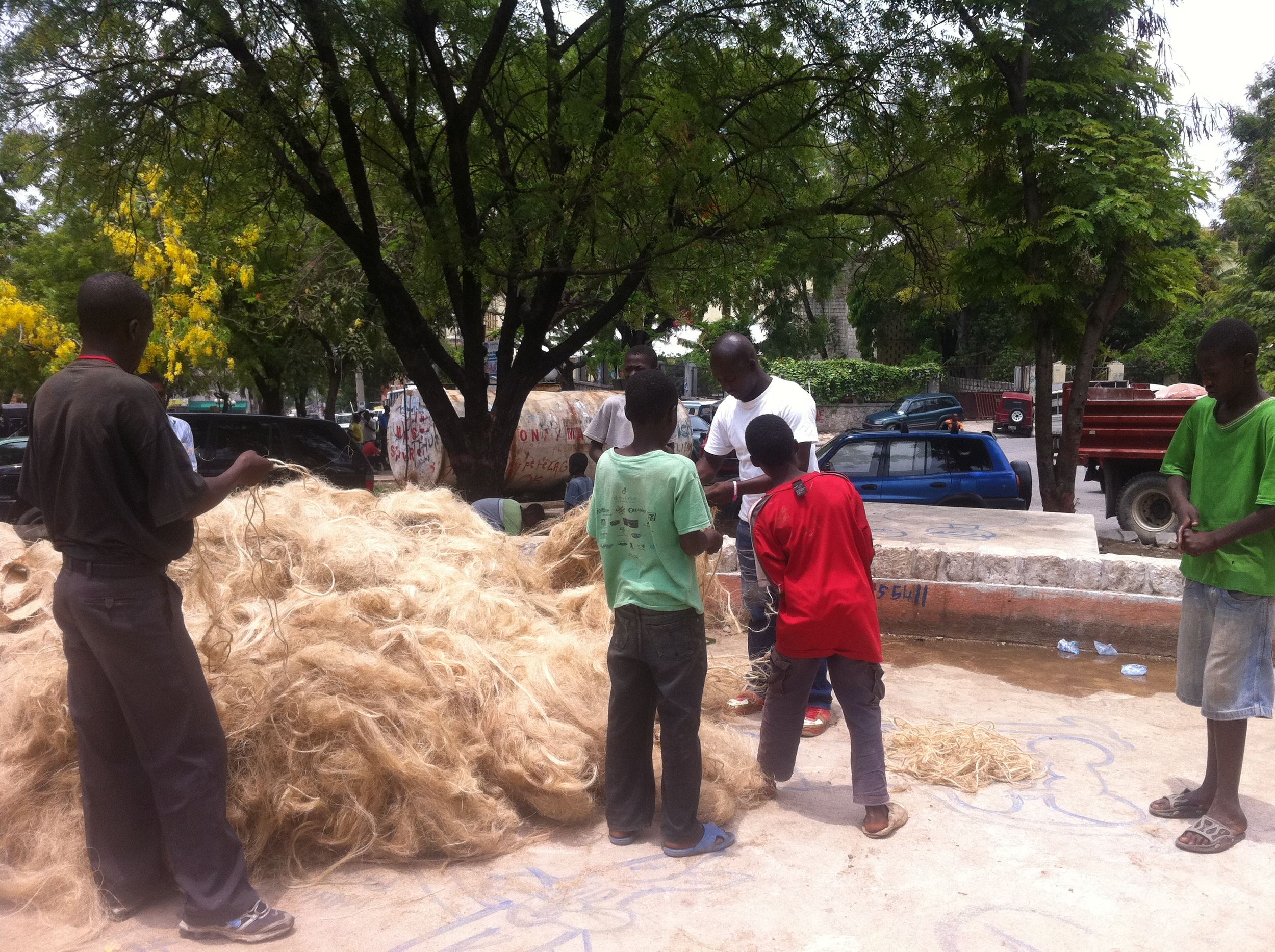 load of sisal grass from local producer