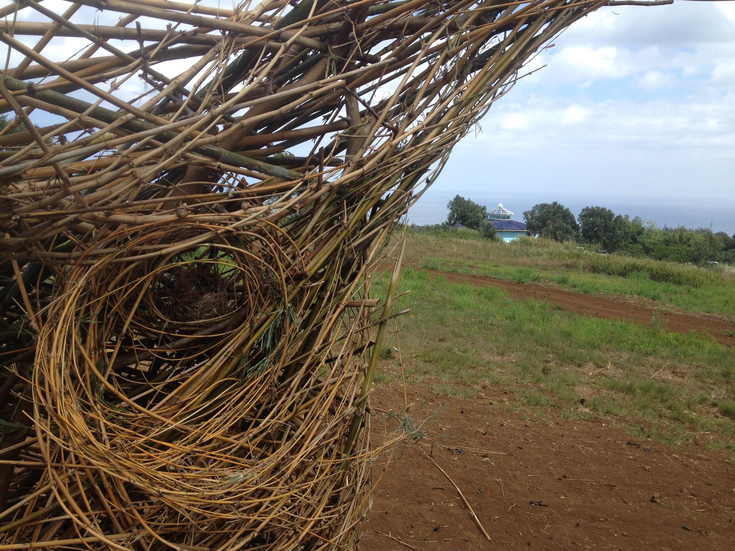 Maui Sacred Earth a.JPG