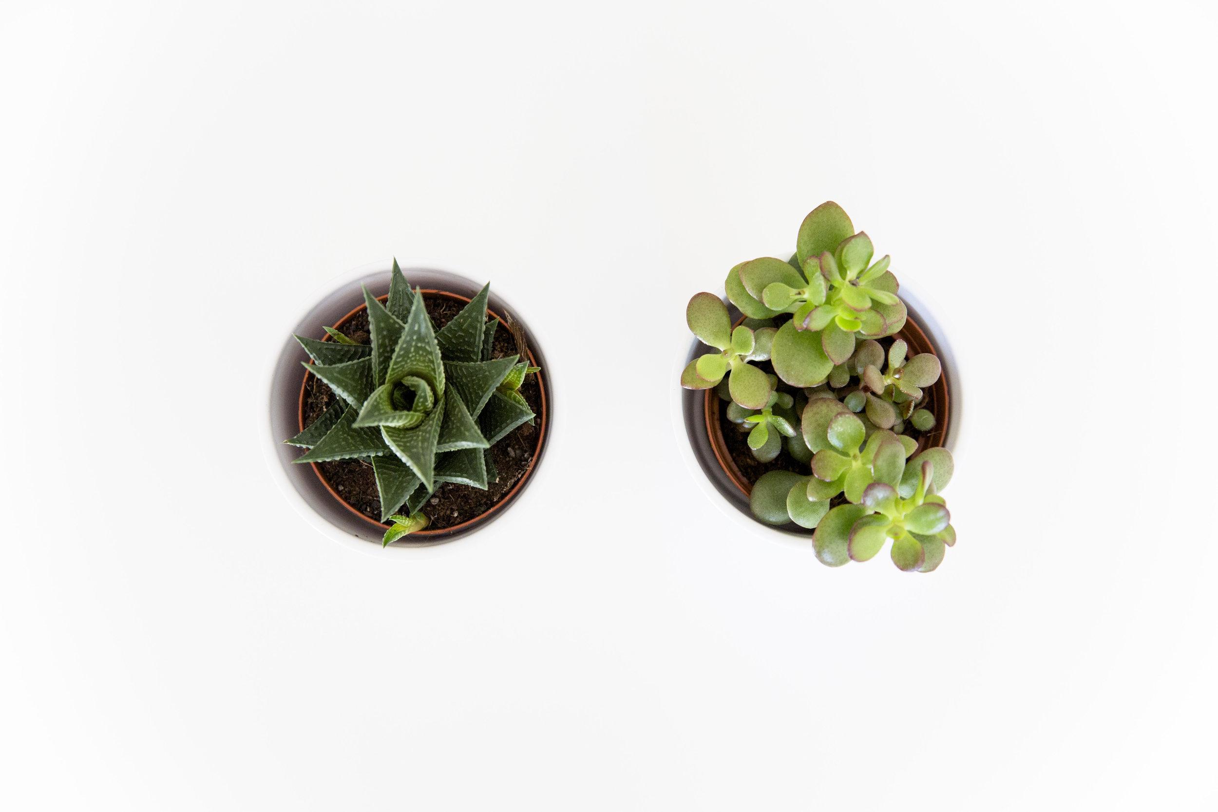 grønne planter_1.jpg