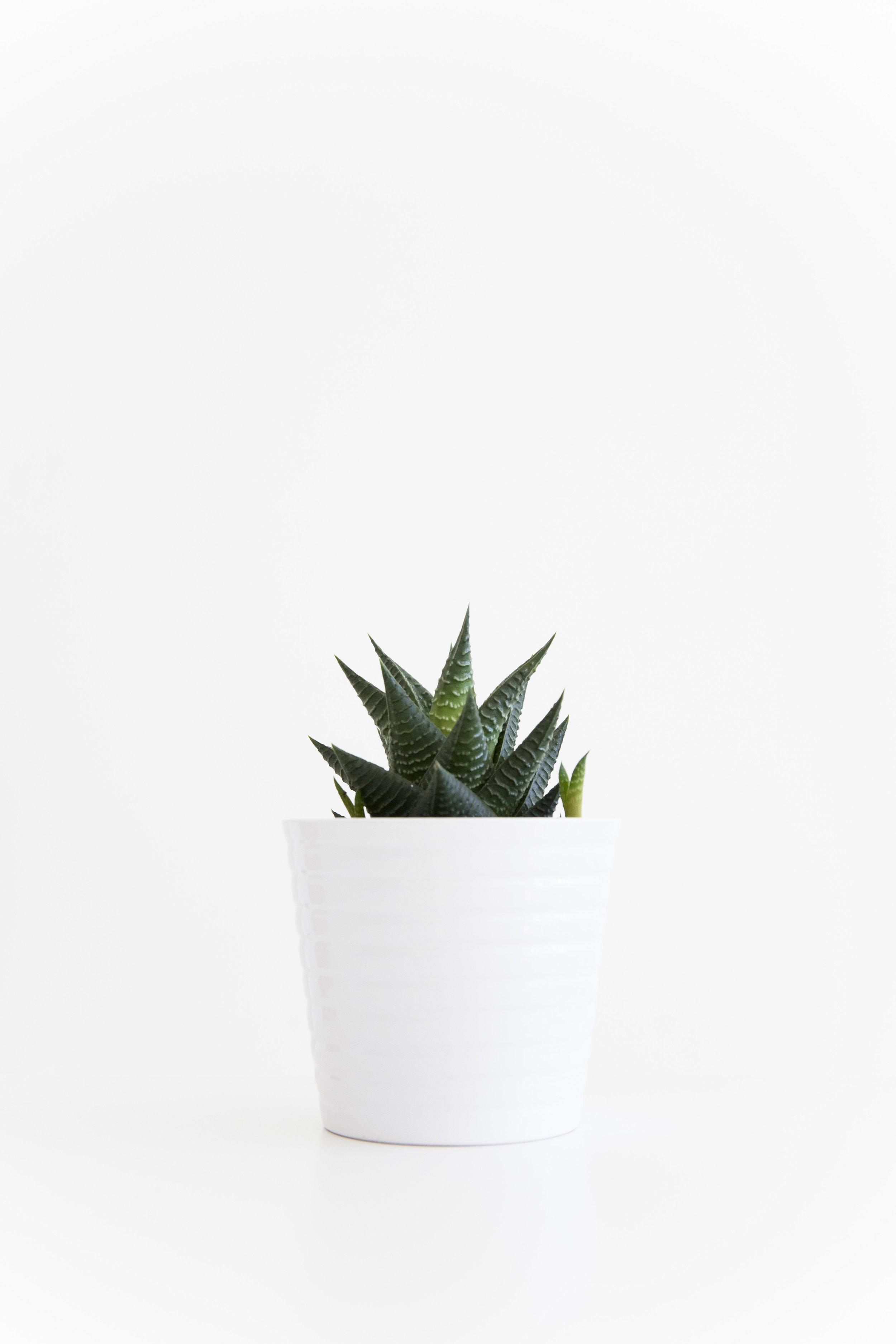 grønne planter_6.jpg