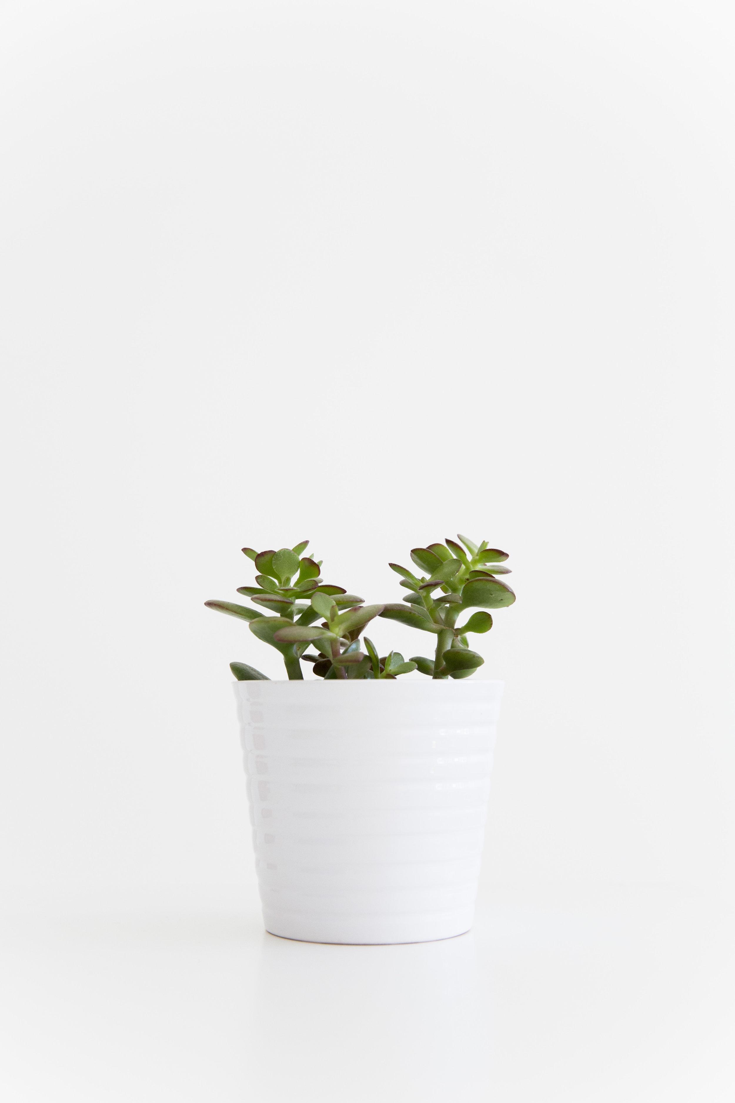 grønne planter_7.jpg
