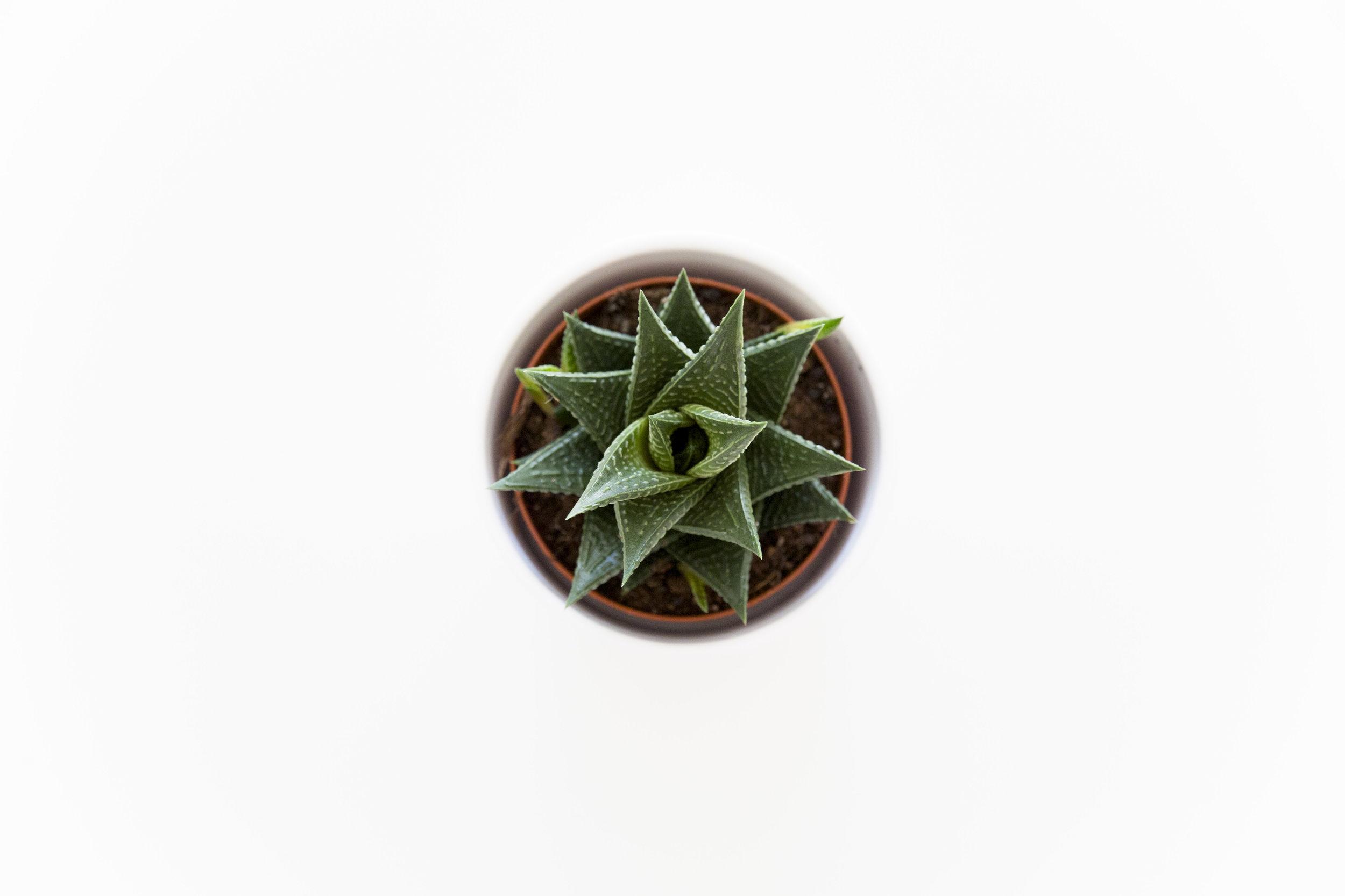 grønne planter_3.jpg