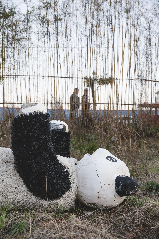 panda20170216_0032_1.jpg