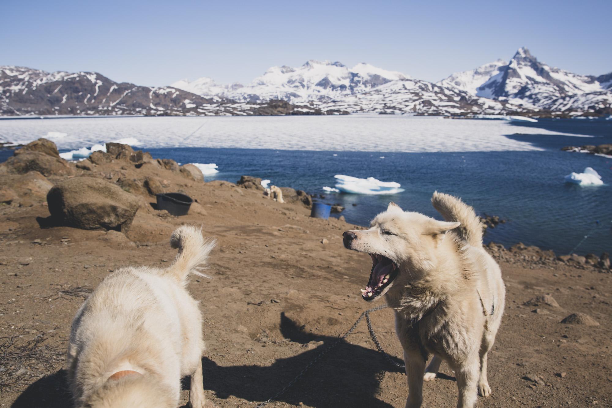 grønland-4.jpg