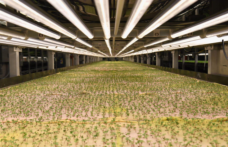 urban-farming-carole-zimmer.jpg