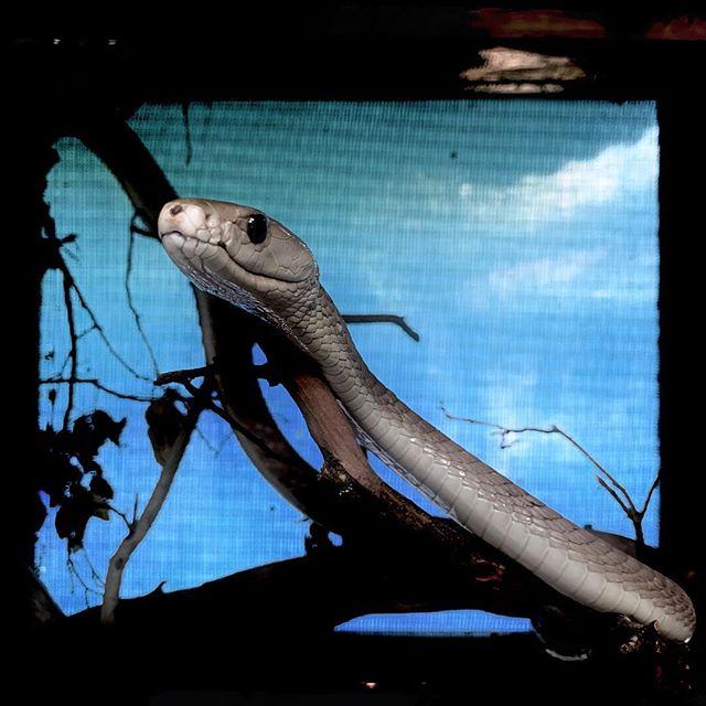 Bio-ken snake / Kenya