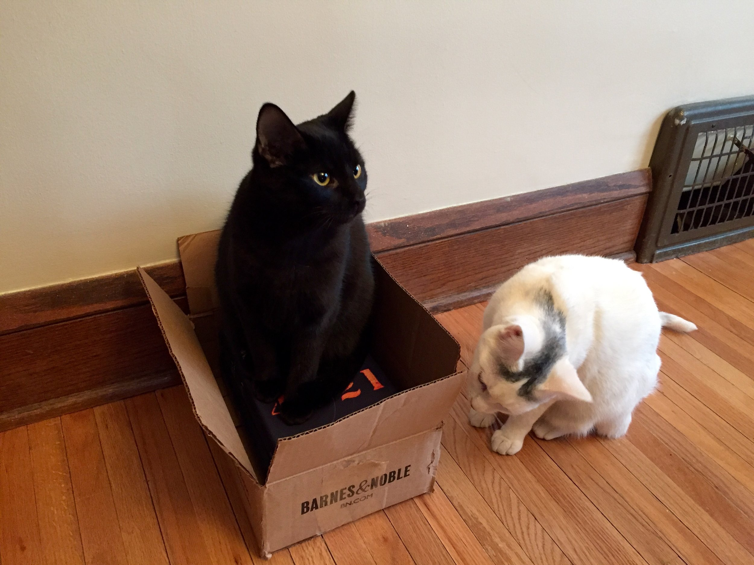 Scout and Charlotte helping me open the box