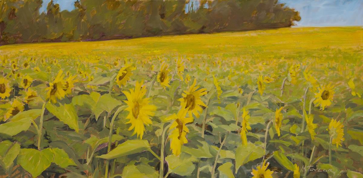 Hess Sunflowers