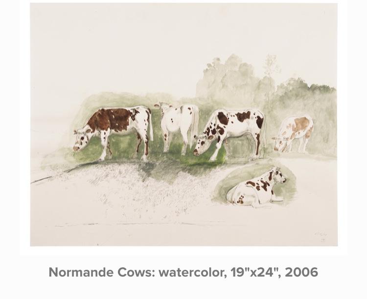 Normande Cows