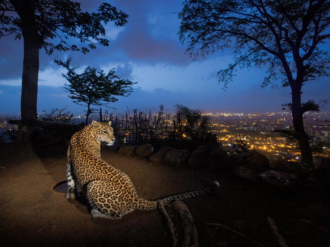 ©Steve Winter, National Geographic/NatGeo Wild