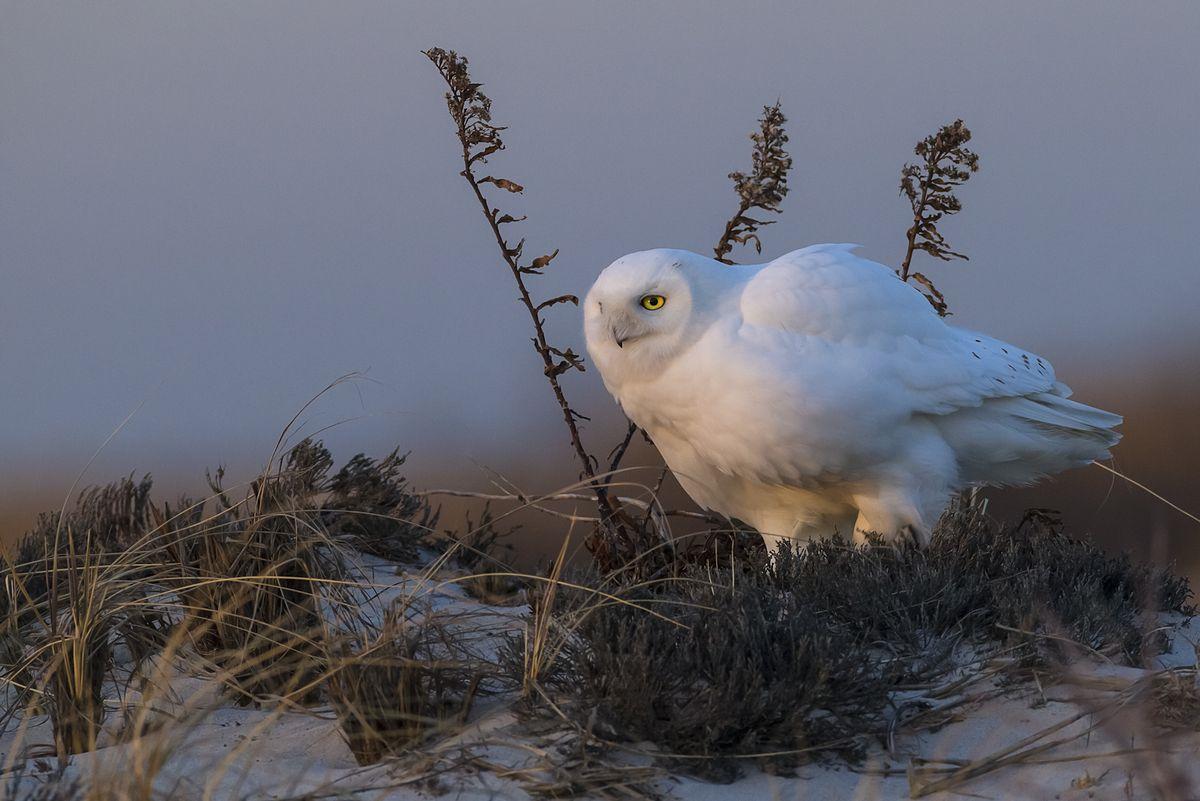 ©Scott Joshua Dere/Nature's Best Photography